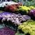 Evergreen Nursery & Garden Supply
