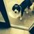 Sassy Styles Pet Grooming Spa