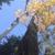 Red Cedar Arborists & Landscapers
