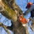 Agnew Tree Service