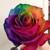 Clarksburg Area Florist