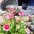 Little Sprouts Learning Garden Childcare & Preschool