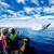 Blue Sea Cruises Inc.