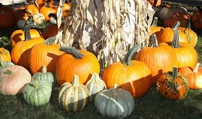 Pumpkin Patches Around L.A.: Go Full-Gourd for Fall