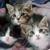 Forgotten Felines and Fidos Inc