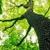 Advance Tree Service