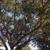 "Jeremy Longworth ""Tree Care Specialist"""