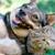 Cherished Companions Animal Clinic