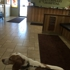 Carson Valley Veterinary Hospital