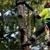 Arbor Tree Care