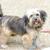 Walnut Trace Animal Clinic
