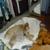 Operation Kindness Animal Shelter