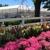 Comisky's Greenhouses Inc