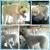 Aussie Pet Southern California