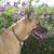 My Dog's Friend Professional Pet Care Services