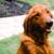 The Pet Hospitals-Houston Levee