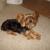 Association For A Pet Adoption