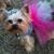 4 My Pet Grooming & Boarding