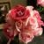 Brigitte's Flowers Galore