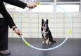 San Francisco SPCA Dog Training - San Francisco, CA