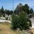 Carroll's Landscape Services LLC