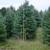 Big Tree II Inc