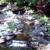 Water Garden & Koi Co