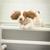 Happy Hound Dog Resorts