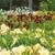 Hillbilly Daylilies