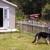 Sammy's Homestead Dog Boarding