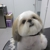 Adorable Pet Grooming & Nutrition