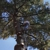 Clemons Tree Experts & Clearing