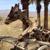 The Living Desert Zoo & Gardens
