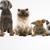 Bonjour's Pupp Parade LLC