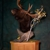 Timberland Taxidermy