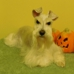 Pampered Pet Grooming & Training - CLOSED