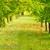 A & V Tree Cutting Service LLC