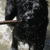 Lennox Care Pet Sitting Services
