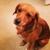 DogVacay I Blissful Puppy Retreat