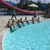 Myrtle Beach Mermaids