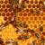 Katy Busy Bee