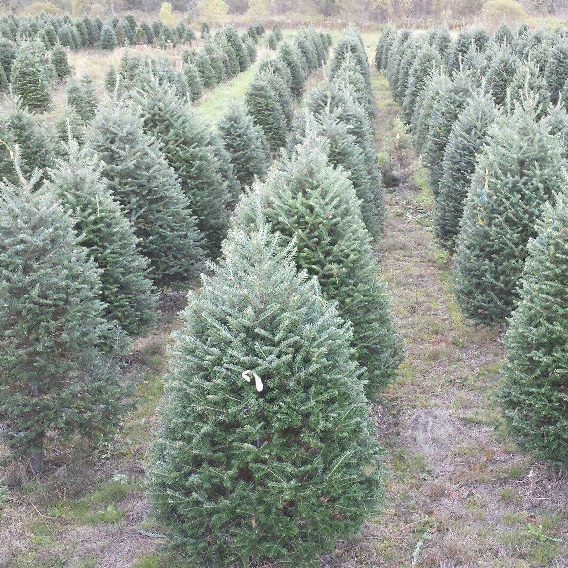 Sibgo Tree Company, Colebrook NH