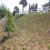 Gomez Lawn & Tree Service
