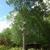 JJ Tree Cutting Services LLC