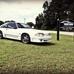 Prestige Mustang