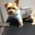 Pampered Puppy Dog Grooming