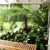 Tropical Tree Services Inc.