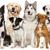 Brown's Dog Training Lodging & More