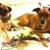 Bourbon Bark Dog Walkers