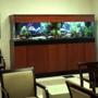 Affordable Aquarium Service
